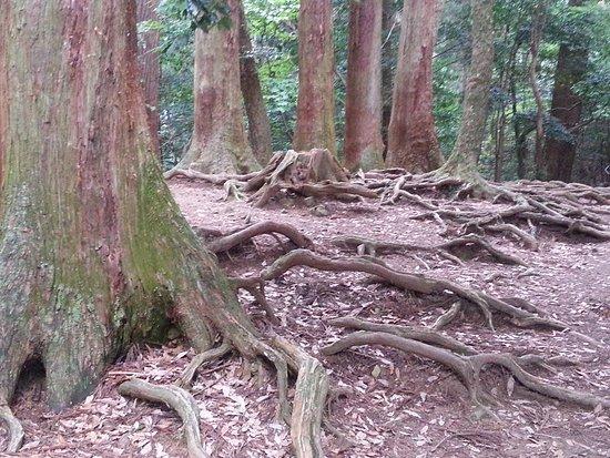 Mt. Kurama