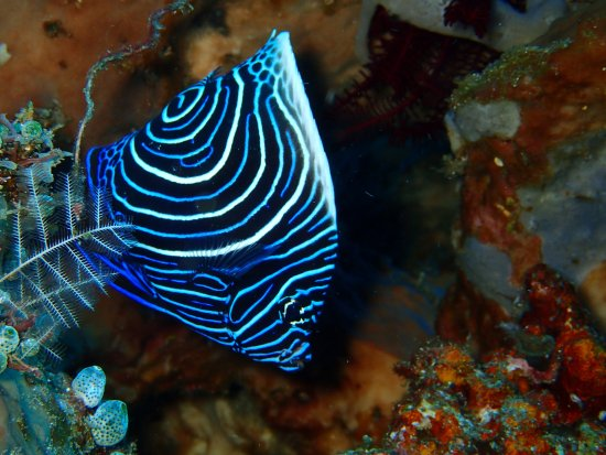 Kerobokan, Indonesia: Un aperçu des fonds marins : paradis des plongeurs