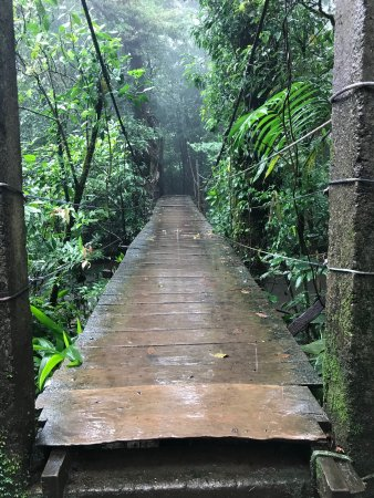 Tenorio Volcano National Park, Costa Rica: Un pont assez stressant à franchir, pas très stable.