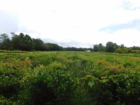 Wadmalaw Island, SC: Charleston Tea