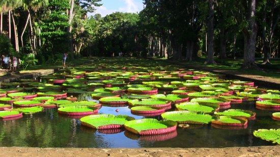 فليك إن فلاك: Pamplemousse giardino botanico