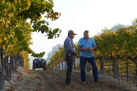 Templeton, CA: Vineyard managers
