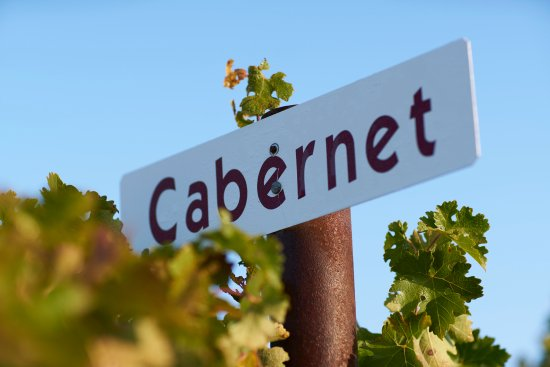Templeton, CA: Our Estate Cabernet Sauvignon vineyard