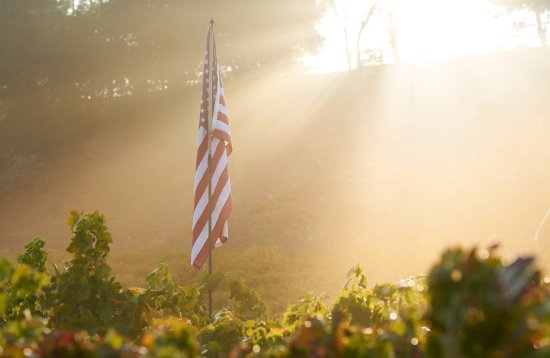 Templeton, CA: Our Estate vineyard