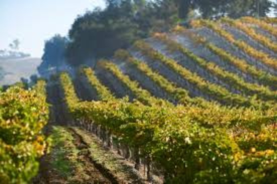 Templeton, Californie : Our Estate Vineyard