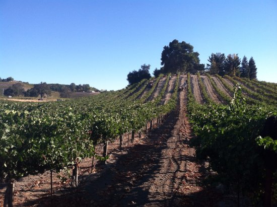 Templeton, Kalifornien: Our Estate Vineyard