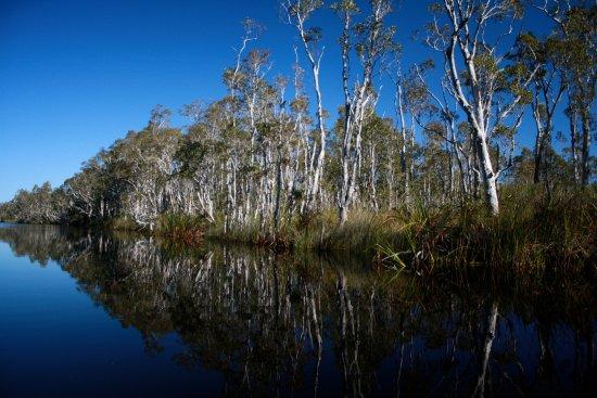 Boreen Point, Αυστραλία: Tree reflection.