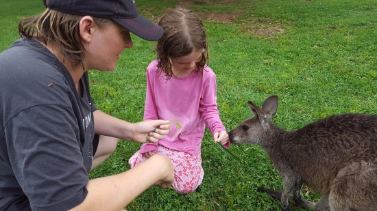 Horse Cave, KY: Feeding the kangaroos!
