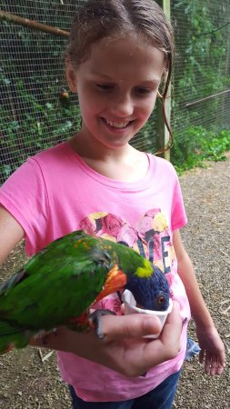 Horse Cave, Кентукки: Feeding the rainbow lorikeets.