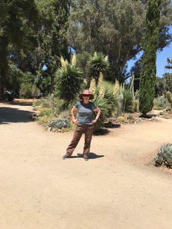 Palo Alto, CA: At the circle of cactus