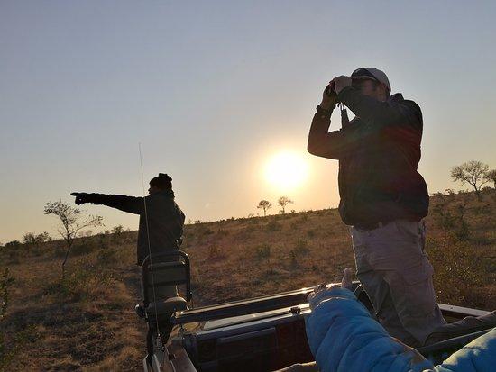 Manyeleti Game Reserve, Sudáfrica: safari