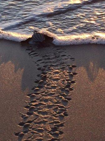 Playa Negra, Costa Rica: tour pic