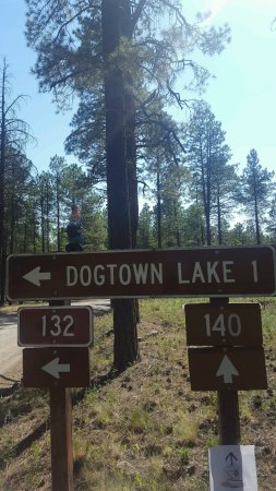 Dogtown Lake Campground照片
