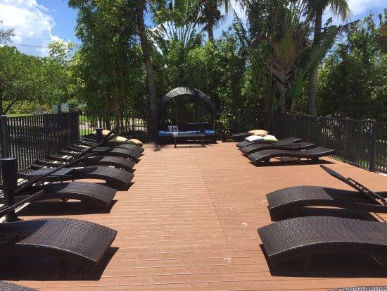 Pet Friendly Hotels St Pete Beach Area
