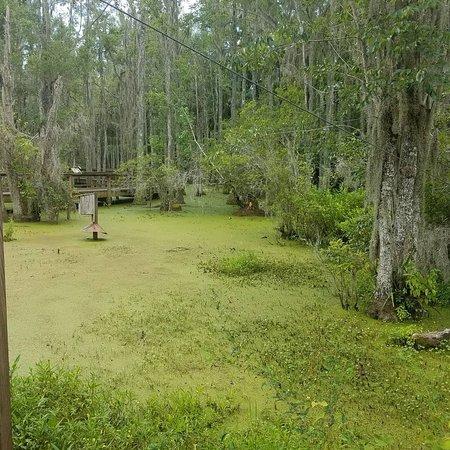 Audubon Swamp Garden: IMG_20170711_210137_645_large.jpg
