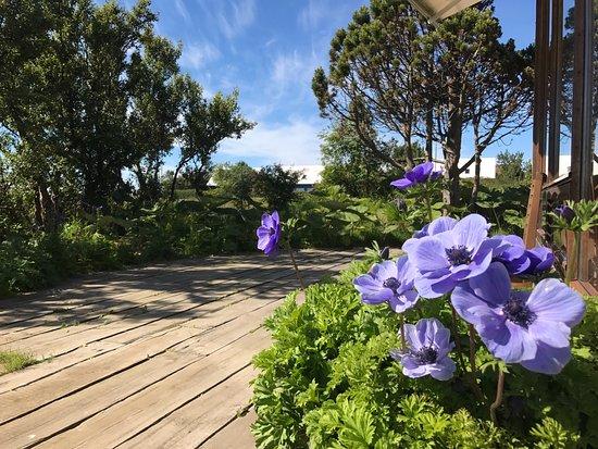 Alftanes, Islândia: Garden terrace in our garden