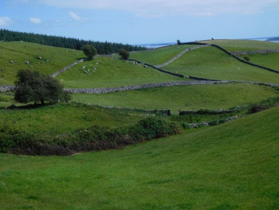 Gowran, Ireland: Irish fields on a glorious morning.