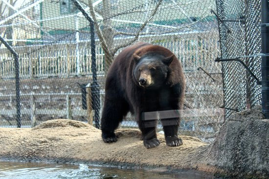 Zooamerica North American Wildlife Park Hershey Pa Top