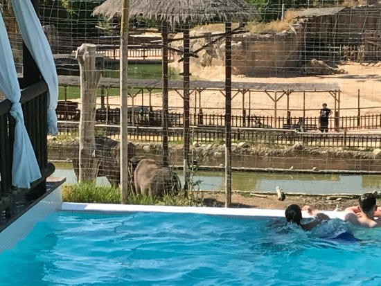 picture of magic natura animal water park. Black Bedroom Furniture Sets. Home Design Ideas