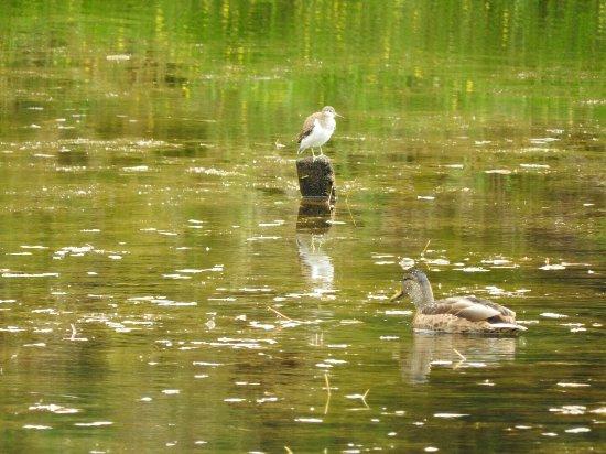 Aviemore, UK: Craigellachie National Nature Reserve