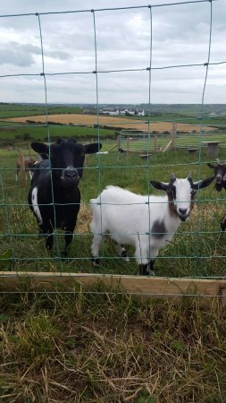 Bushmills, UK: Cutest little guys 😙