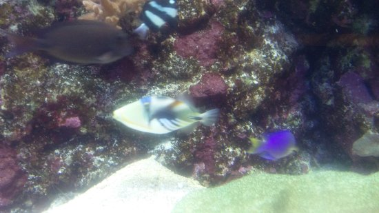 Aquarium des Lagons Nouvelle Caledonie: IMG_20170711_011722_large.jpg