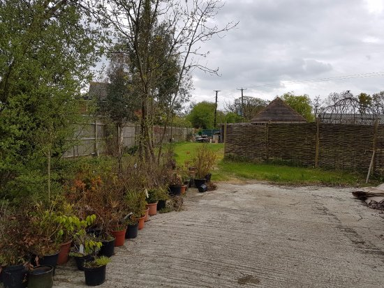 Biddenden, UK: Plants