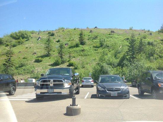 Johnston Ridge Observatory: Nature returning
