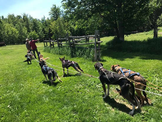 Eden Dogsledding: photo1.jpg