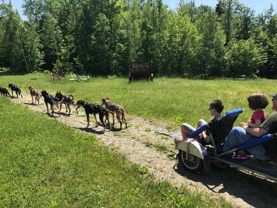 Eden Dogsledding: photo2.jpg