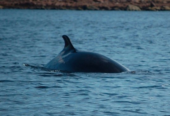 Mary's Harbour, Kanada: One of the many whale sightings near Battle Harbour