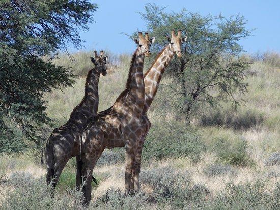Africa Explore Safaris