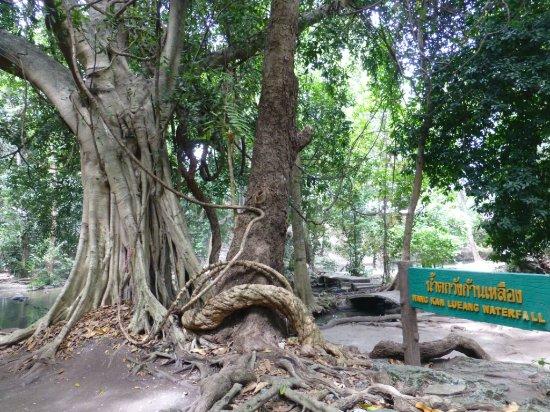 น้ำตกวังก้านเหลือง: Walk amongst the trees
