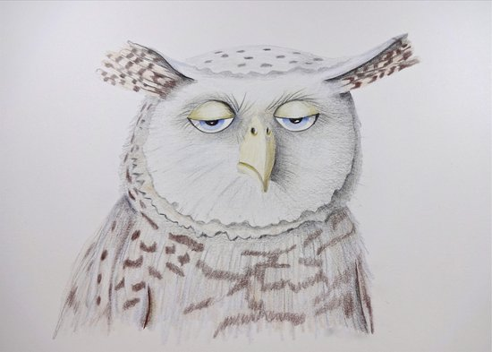 Pacific Beach, WA: Mr Owl, color pencil owl drawing by Karin Phifer