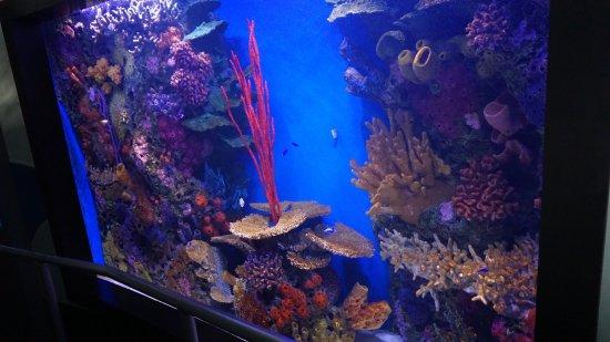 Aquarium Pyramid Picture Of Moody Gardens Galveston Tripadvisor