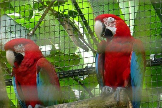 Papaikou, HI: Birds