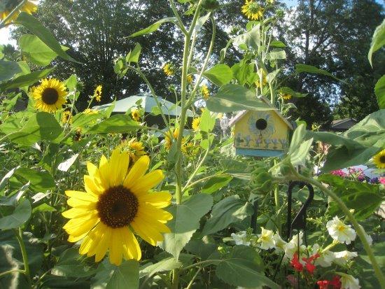 Lowell, Мичиган: Summer at Balls