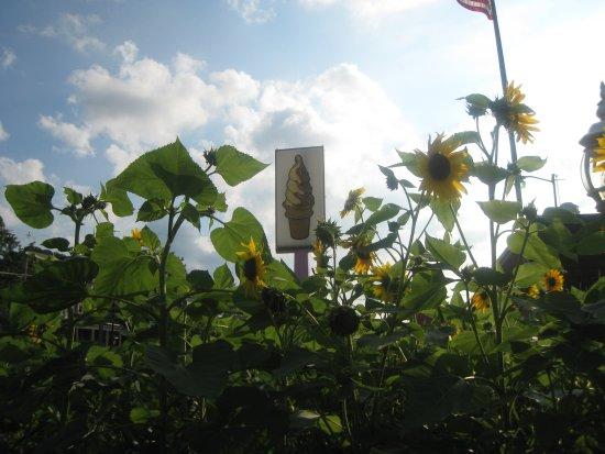 Lowell, Мичиган: Balls in Bloom