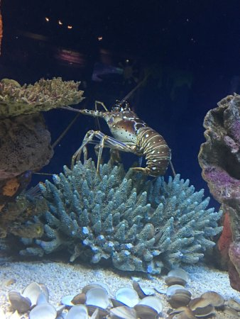 Myrtle Beach Aquarium Admission Prices