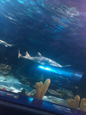 Picture Of Ripley 39 S Aquarium Myrtle Beach