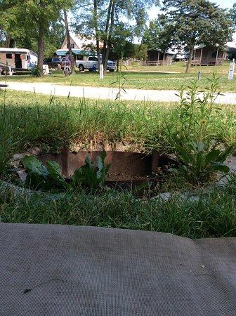 Holly, MI: Weedy fire pit area