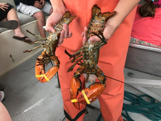 Anatomy Of A Lobster Straight From The Trap Picture Of Lulu