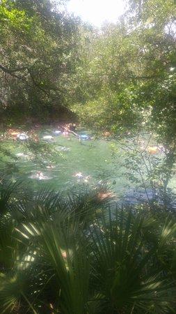 Orange City, FL: IMG-20170713-WA0029_large.jpg