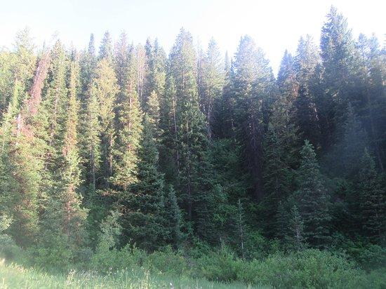 Brighton, UT: Wasatch-Cache National Forest, Utah