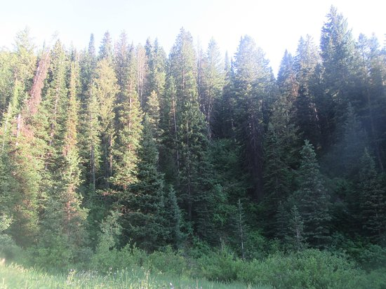 Brighton, Юта: Wasatch-Cache National Forest, Utah