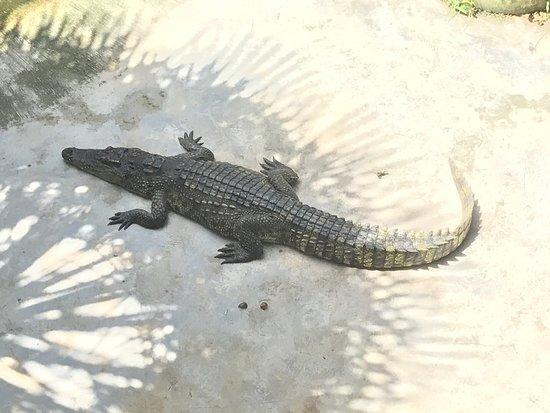 鱷魚園和海洋館 (普吉府) - 旅遊景點評論 - TripAdvisor