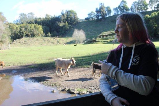 Paradise Valley Springs Wildlife Park: goats