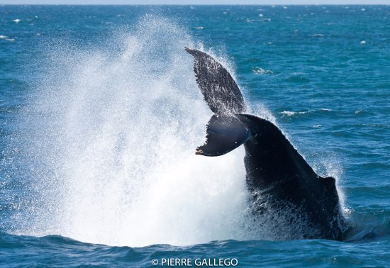 Santa Barbara de Samana, Dominican Republic: Samana Whale Watching from Punta Cana - Tours & Excursions with Terry