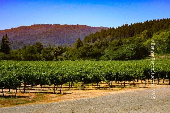 Beringer area - Napa Valley, California