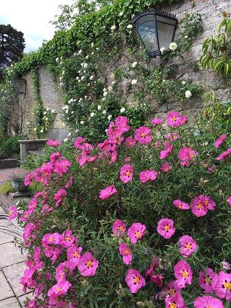 Ticehurst, UK: photo4.jpg
